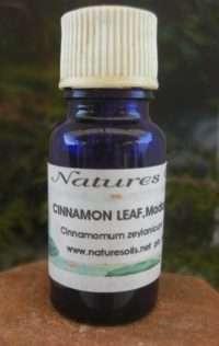 Nature's Oils Cinnamon Leaf