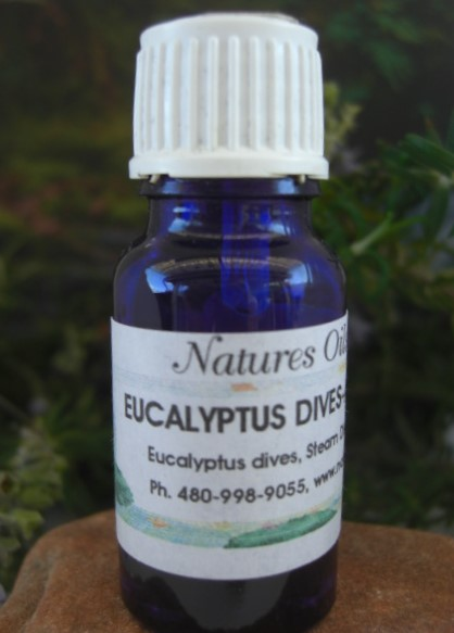 Nature's Oils Eucalyptus, Dives